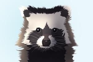 raccoon-1